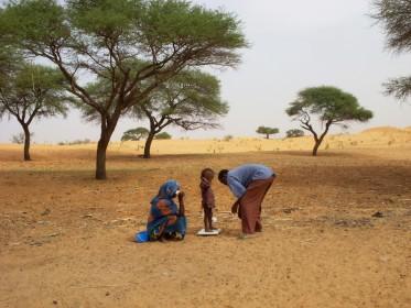 Suivi en brousse / Sentinelles Niger